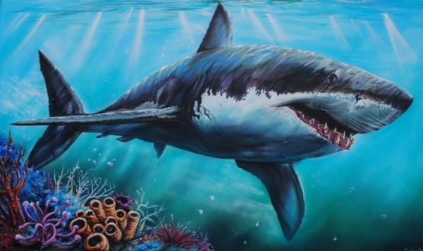 Wildlife Shark Gliding