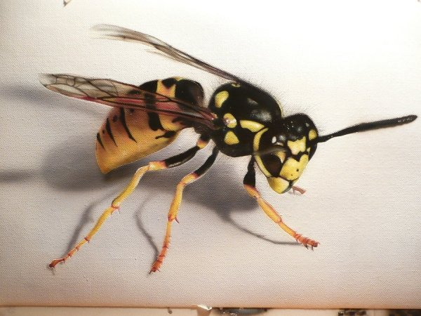Wasp - Airbrush on Canvas
