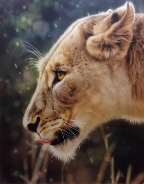 #FuriousAirbrush RSS #Feeds   Animals and wildlife