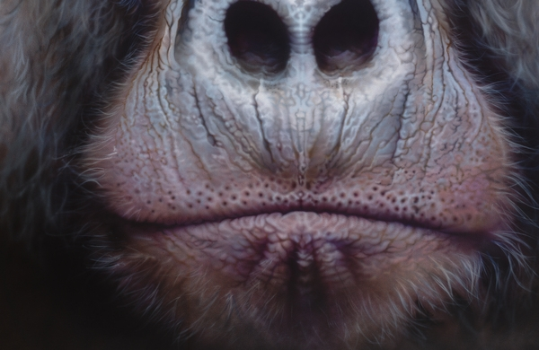 Gorilla - Airbrush Artwoks