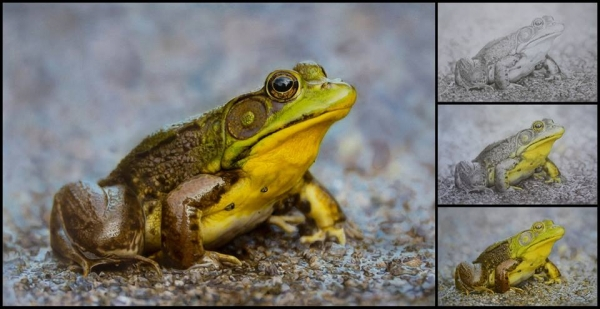 Stunning Frog, airbrush step