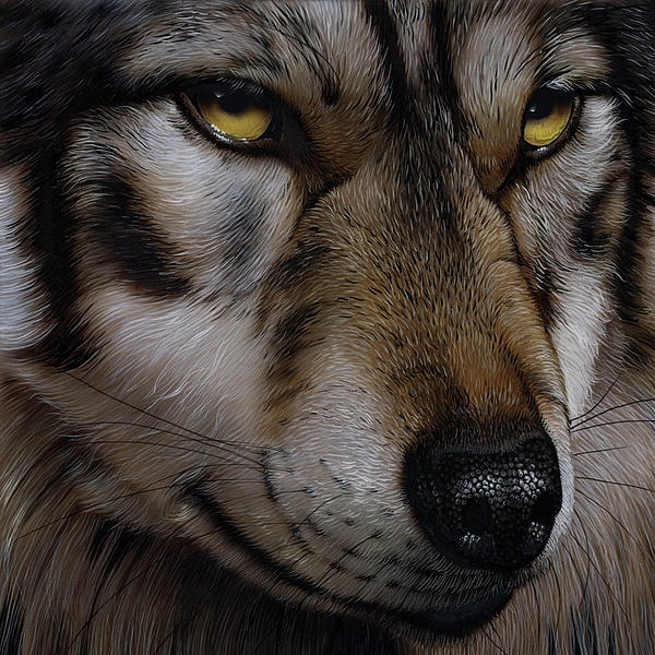 Moon Wolf Painting by Jurek Zamoyski - Moon Wolf Fine Art Prints and Posters for Sale - Photorealism