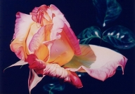Airbrush Photorealistic Rose - Fotorealismo