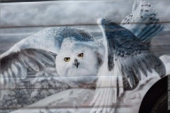 Photorealistic Airbrush Artworks - Fotorealismo