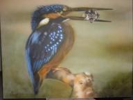 kingfishers - Kingfisher by Julia Tapp - Airbrush Artwoks