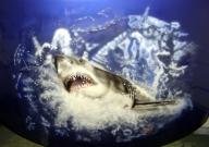 shark on hood - Airbrush Artwoks