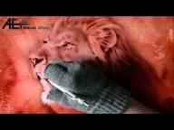 Airbrush Video - Lion - Airbrush Effects - Airbrush Videos