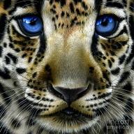 Jaguar Cub by Jurek Zamoyski - Jaguar Cub Painting - Favorite Art
