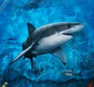 Shark,airbrush,phoenix,arizona,custom,paint,murals,flames | Hypnotic Air - Airbrush Artwoks