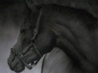 Horse, monochrome airbrush art - Favorite Art