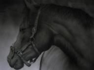 Horse, monochrome airbrush art - Favorite Art