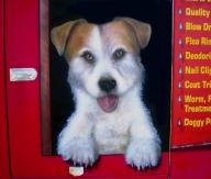 Dog wash Trailer (rear door) - AUTO ART
