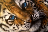 Victoria Airbrush Art - Favorite Art