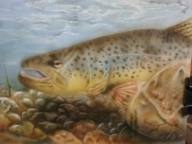 Brown Trout 5x7 - Basepaint