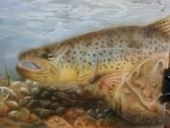 Brown Trout 5x7 - Basepaint