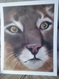Mountain lion - Basepaint