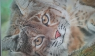 Bobcat 8 x 10,golden high flow,sprayed thru an Iwata HP-CS - Favorite Art