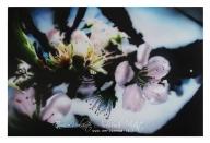 flower on alluminium panel, cm.40x60 - Airbrush Artwoks