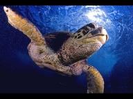 #Airbrush Speed Painting / Draw an airbrush Turtle - YouTube - Airbrush Videos