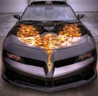 Phoenix - Airbrush Artwoks