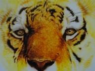 Tiger | Airbrushart - Airbrush Murales