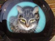 Cat - Car Airbrush