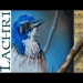 ▶ Speed painting - Jay Bird airbrush and acrylic - photorealistic Time Lapse tutorial by Lachri