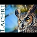 Speed Painting Great Horned Owl