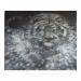 blackandwhite - White Tiger by Julia Tapp