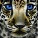 Jaguar Cub by Jurek Zamoyski - Jaguar Cub Painting