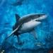Shark,airbrush,phoenix,arizona,custom,paint,murals,flames | Hypnotic Air