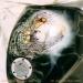 ArteKaos Airbrush - Kustom Airbrush Tank