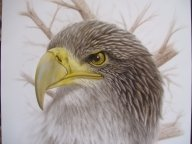 Airbrushed on board - Photorealism