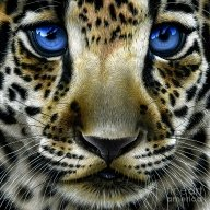 Jaguar Cub by Jurek Zamoyski - Jaguar Cub Painting - Favorite Art